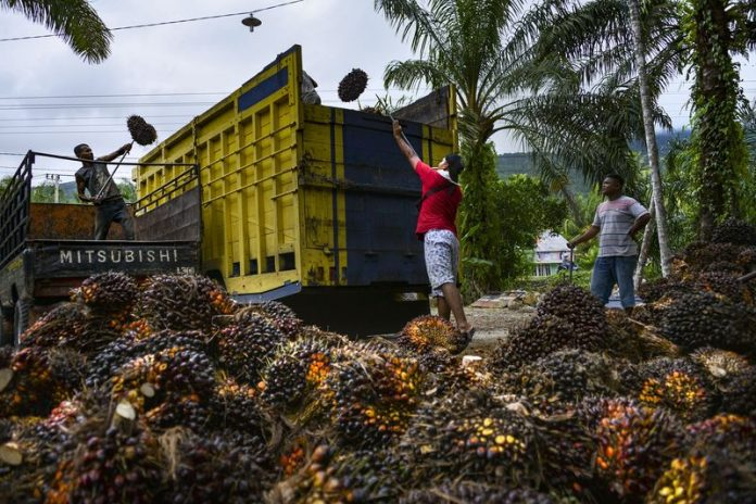 La Nina Rain Set to Lift Palm Oil Output in Top Grower to Record
