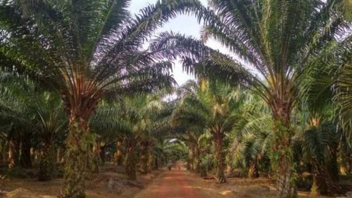 GIMNI: Industri Sawit Indonesia Semakin Kuat Pasca PMK 191/2020